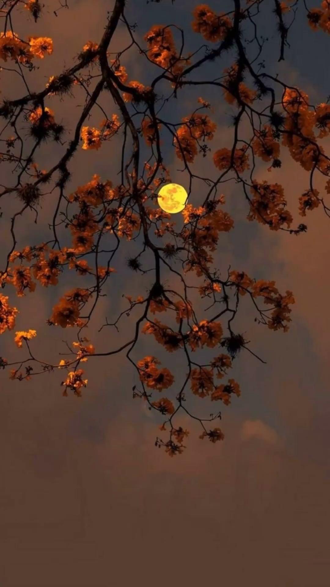 Lua | Fases da Lua | Lua Vermelha | Moon | Paisagens | Wallpaper | Papel de Parede
