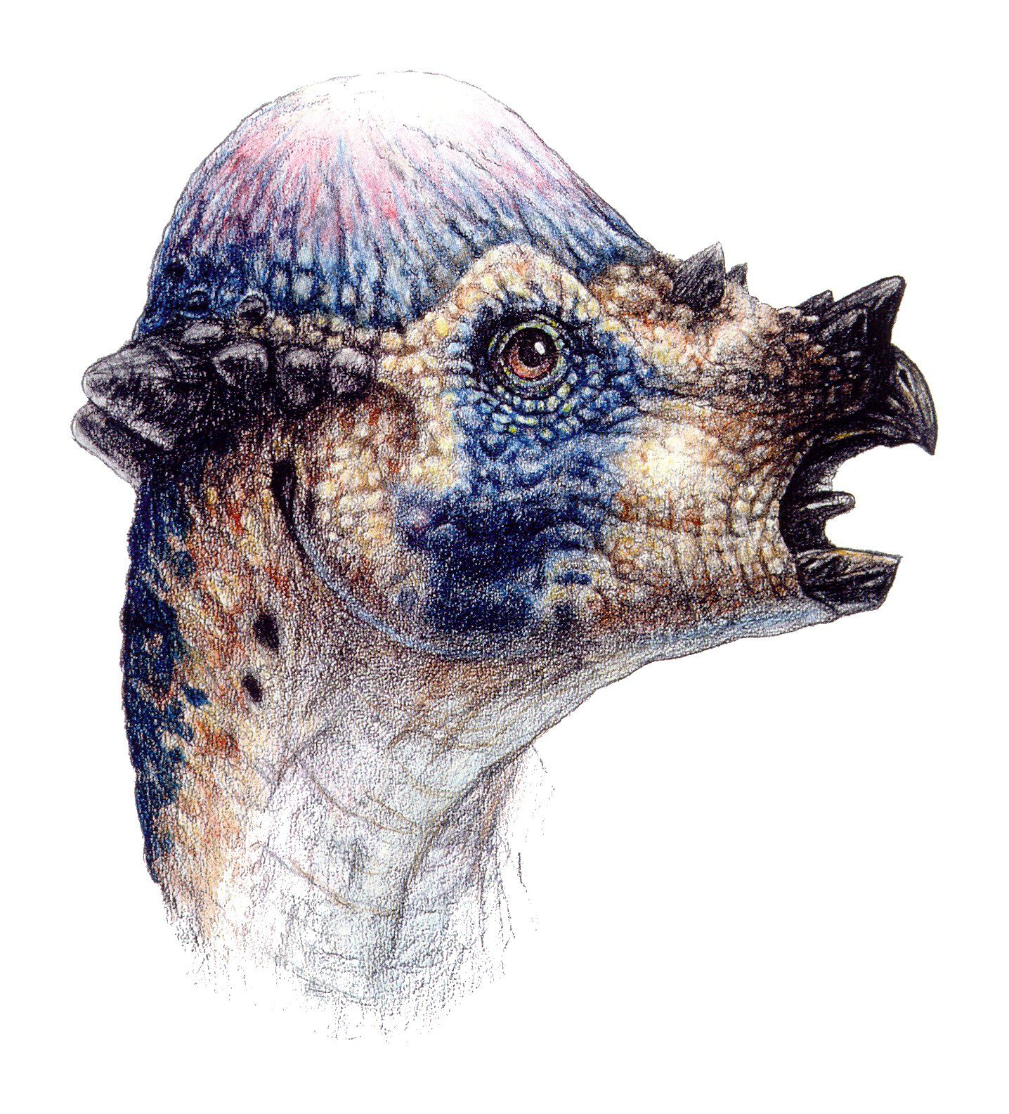 The Lost World Jurassic Park Pachycephalosaurus head ... Pachycephalosaurus Head