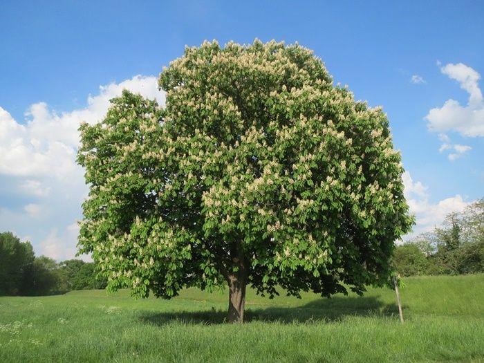 Pin By Graham Bridden On Natural World Trees Shrubs Flowering