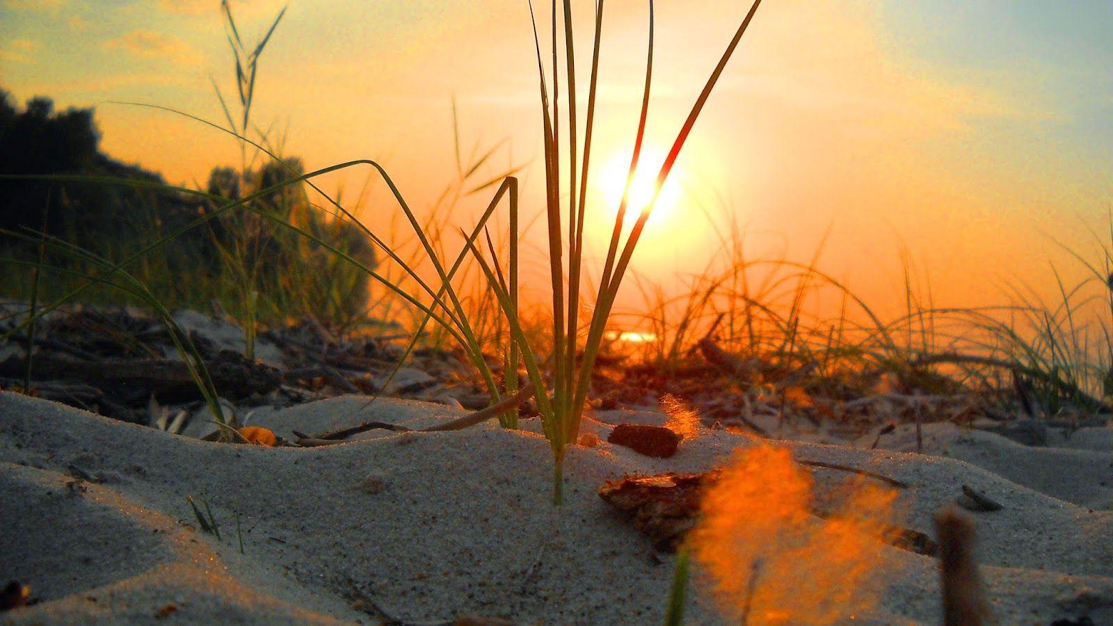 صـــور بــــلا حـــدود حمل اجمل خلفيات سطح المكتب لويندوز السفن خلفيات Nature Grass Sun