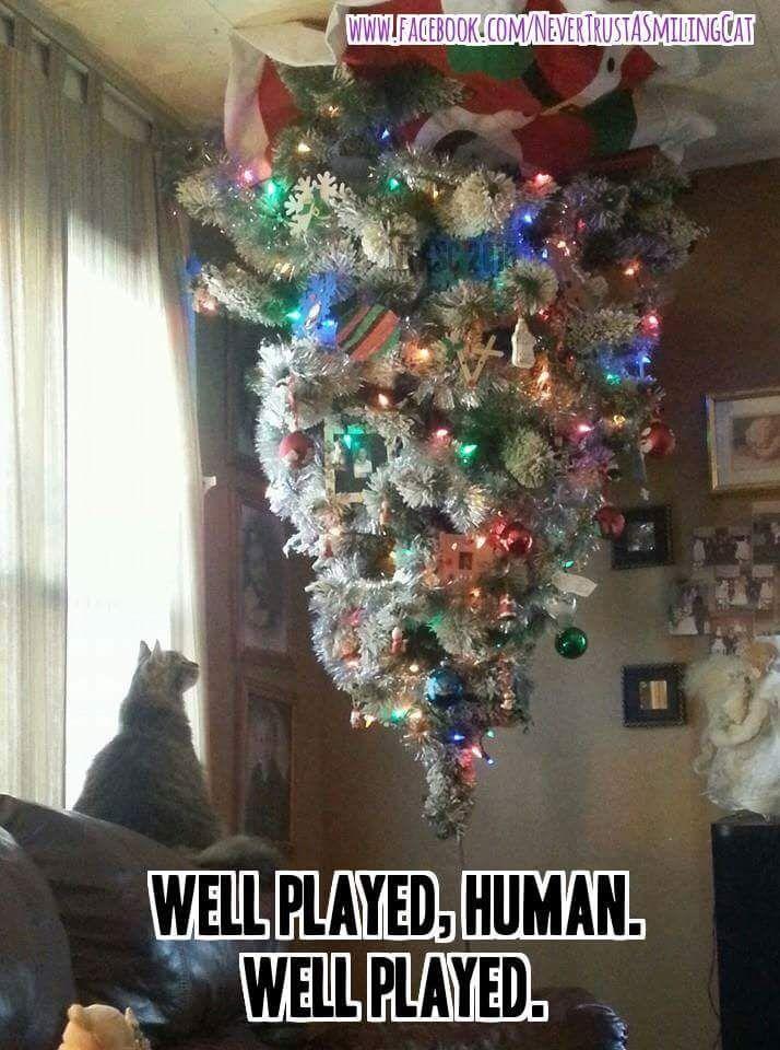 Pin by Nancy Doss on Christmas   Cat christmas tree, Christmas cats, Upside down christmas tree