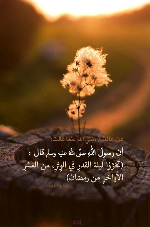 اللهم بلغنا ليلة القدر Dandelion Nature Photography Flowers