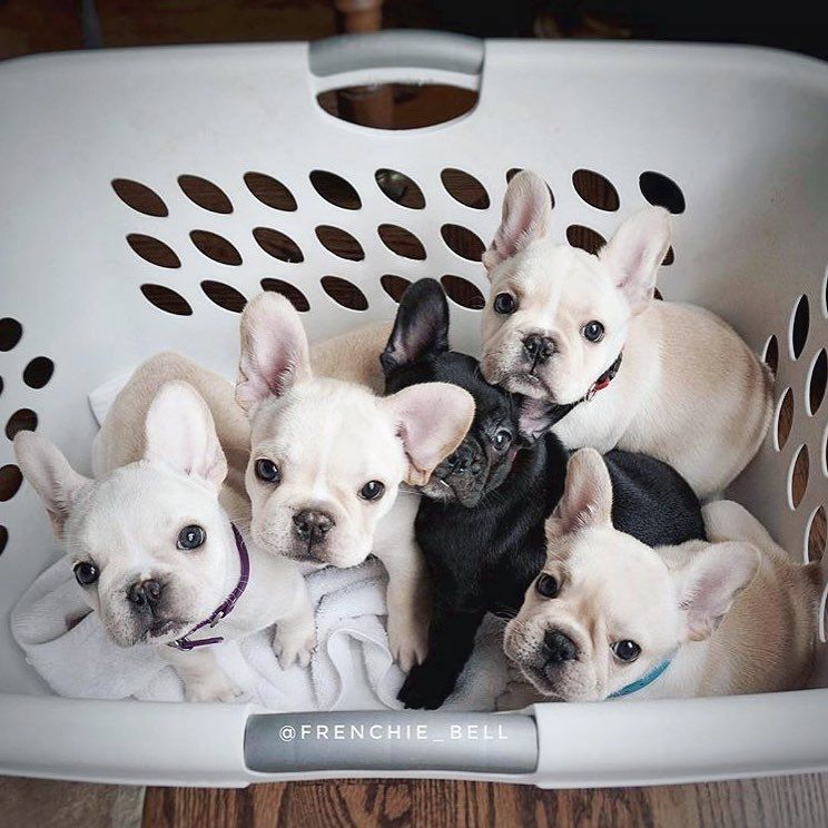 Basket Full Of Babies Cute Animals Cute Funny Animals