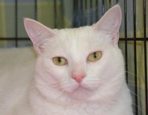 Adopt Lindi On Adoption Cat Adoption Adoption Day