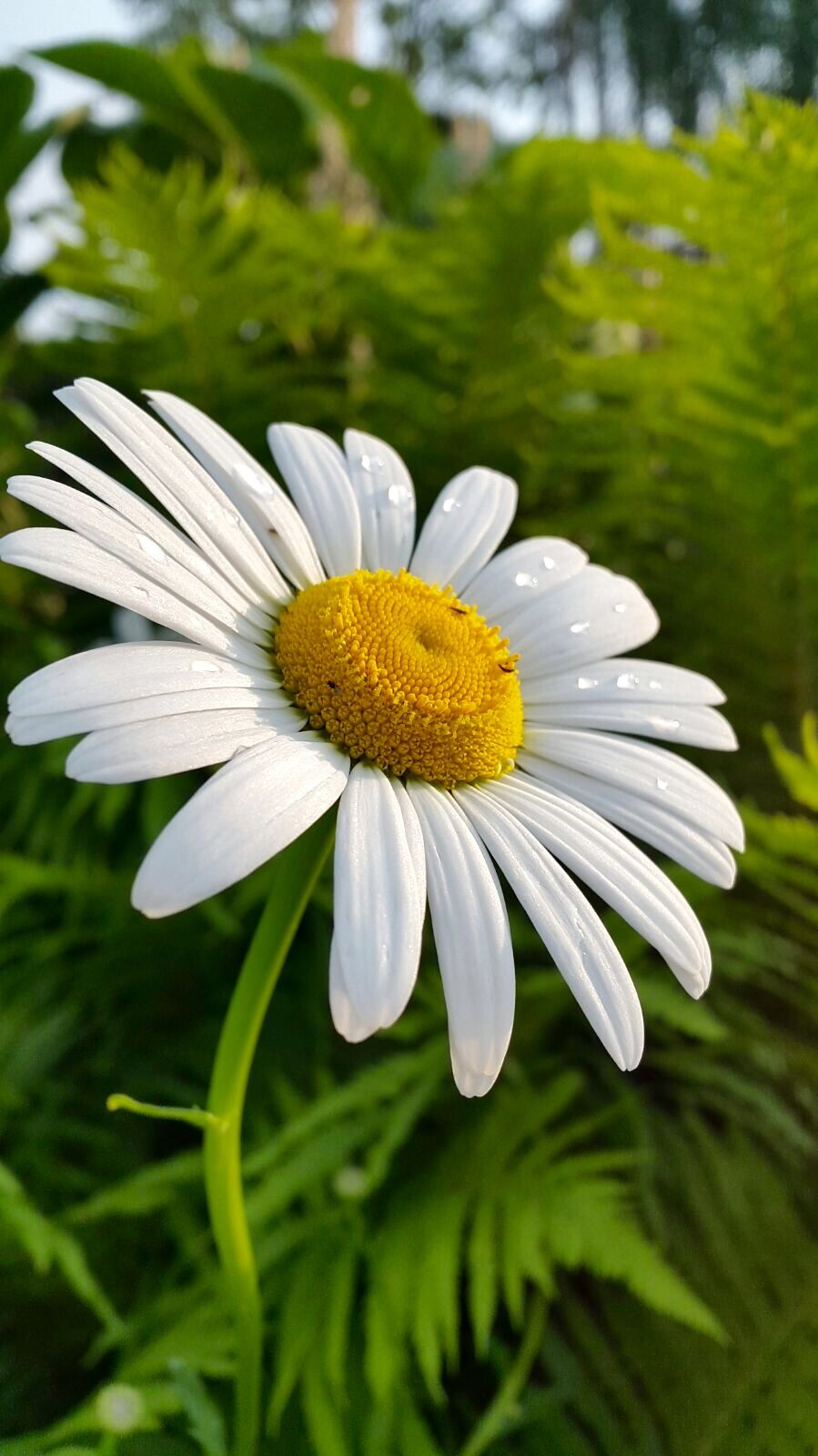 Pin By Stasa Tomovic On Nature Pinterest Flowers Flower And Gardens