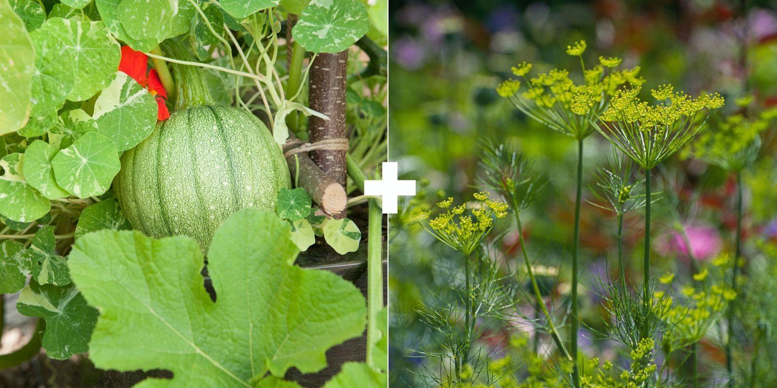 29 Plants You Should Always Grow Side By Side Companion 640 x 480