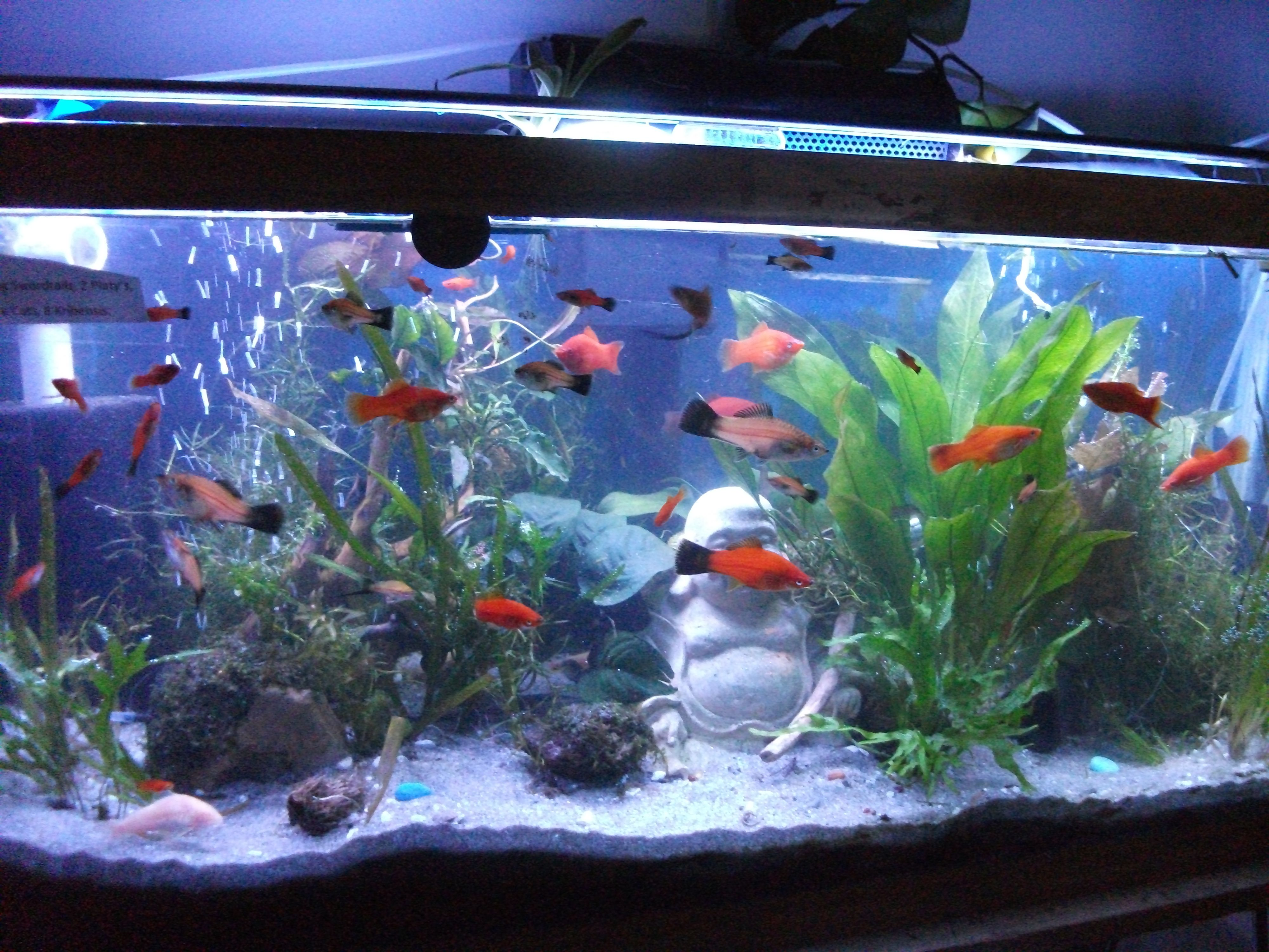 My thirty gallon now that I have removed most of the Stones Rocks