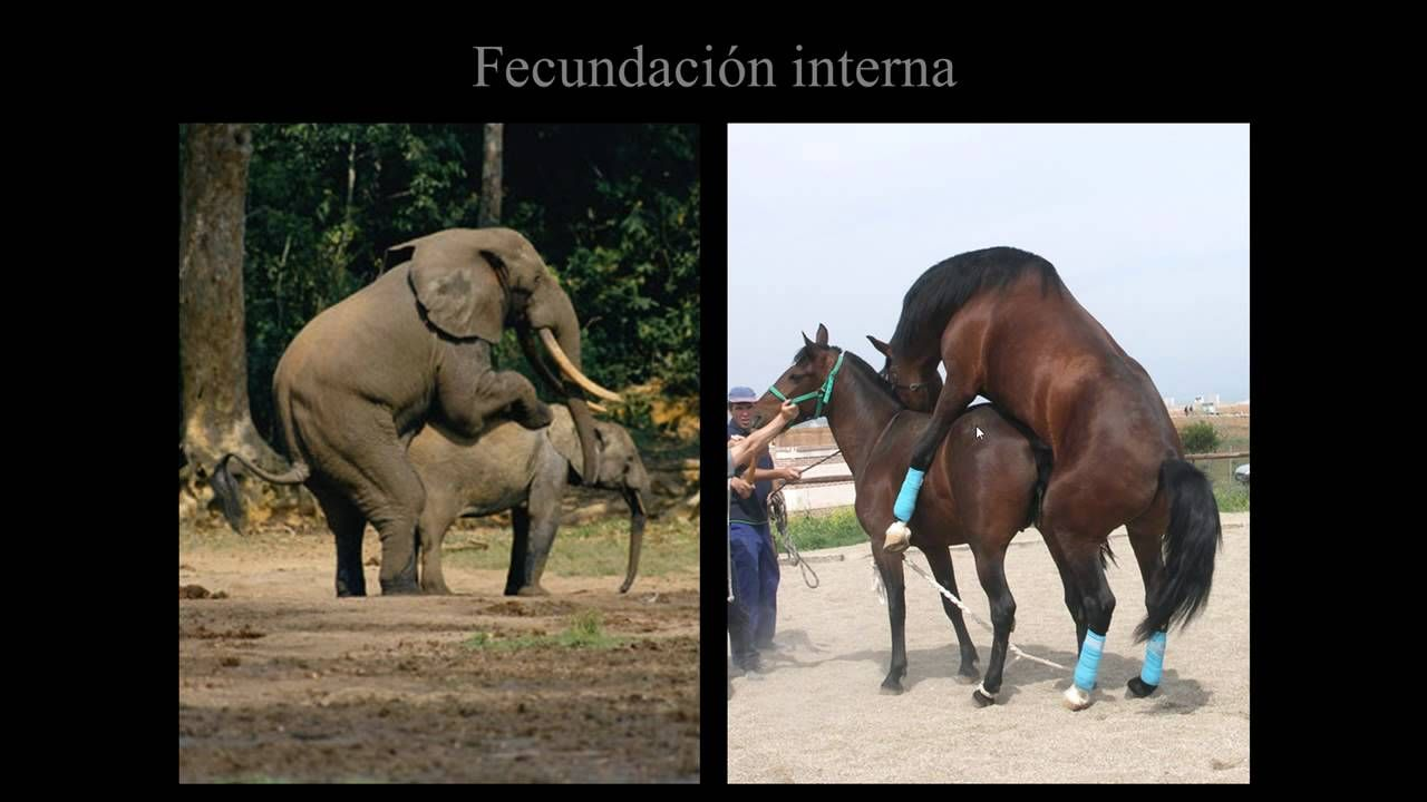 Reproducción Paso A Paso Visión General En Animales Y Humanos Animals Elephant Youtube