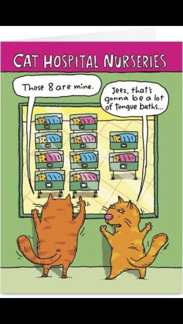 Cat Hospital Nurseries Cats Cat Funny Cartoons Cartoon Cat