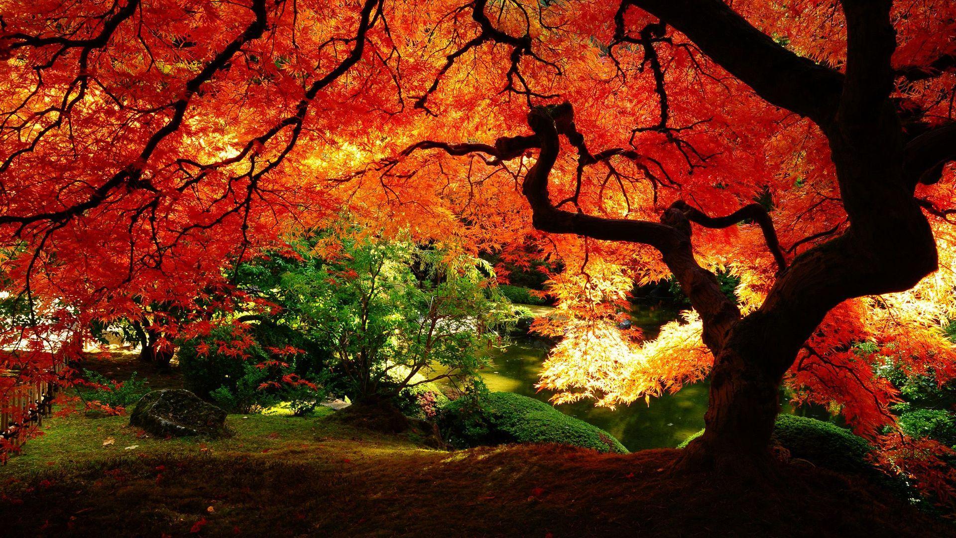 Beautiful Autumn Tree Wallpaper Desktop Wallpaper Fall Landscape Wallpaper Fall Wallpaper
