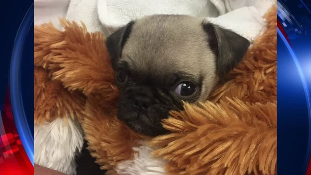 Puppy Parents Are Warning People Across Houston To Beware Of A Seller Who Posts To Craigslist And Various Forums They Want Pote Sick Puppies Puppies Animals
