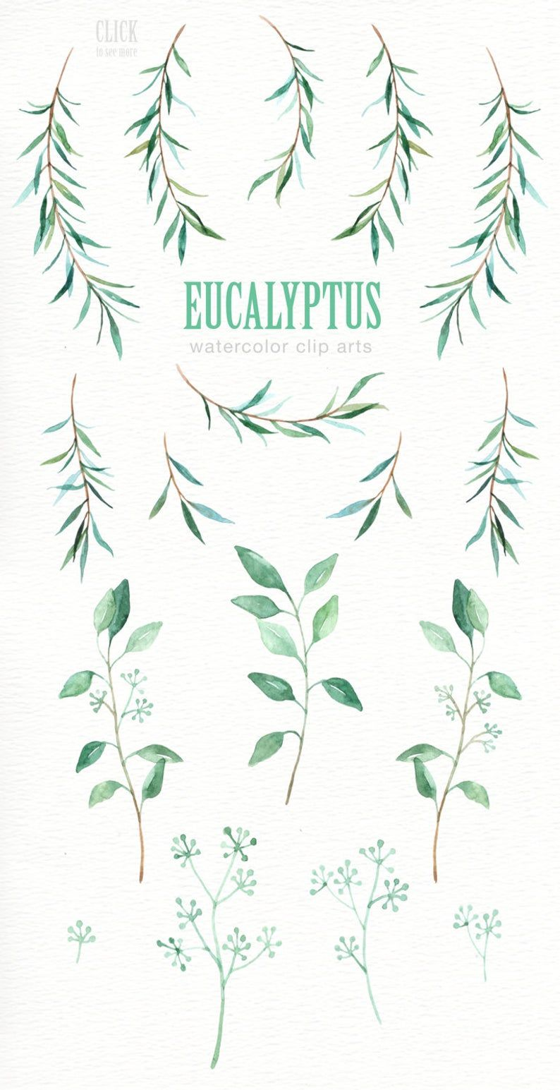 Eucalyptus Leaf Watercolor Clipart Watercolor Flower Watercolour