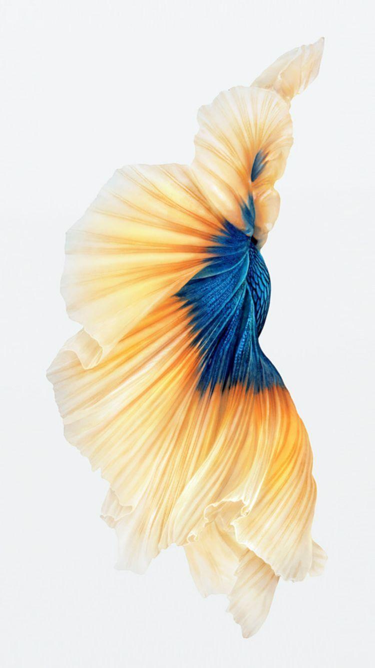 Pin von Rylee Clifton auf •iPhone• | Pinterest