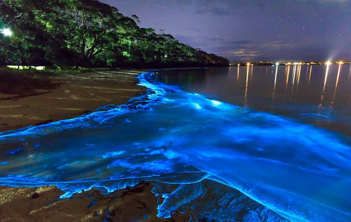 Bright blue bioluminescent water during night time at the beach in Puerto Rico