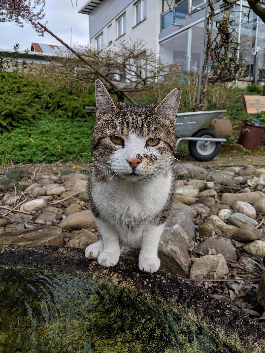 Super Cute Cat On The Streets Streetcat Cutie Feline Domestic Cat Cats Kitten Care