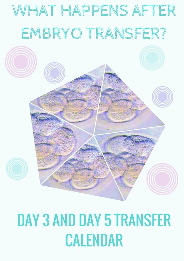 What happens after embryo transfer? Day 3 and Day 5 transfer