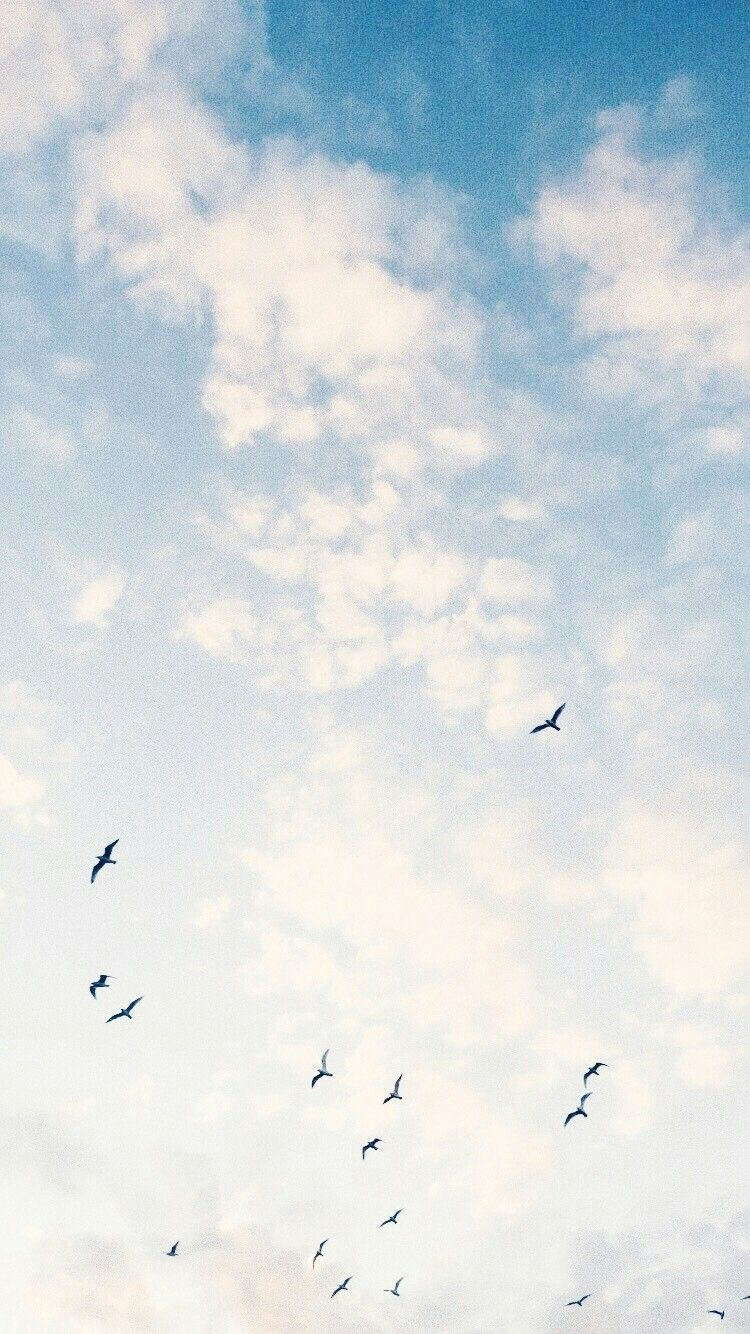 Sky Clouds Beautiful View Aesthetic Wallpaper Pretty Background Freedom Birds Sky Aesthetic Birds In The Sky Aesthetic Wallpapers