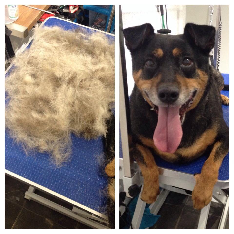 Dog shop dog grooming dog harness
