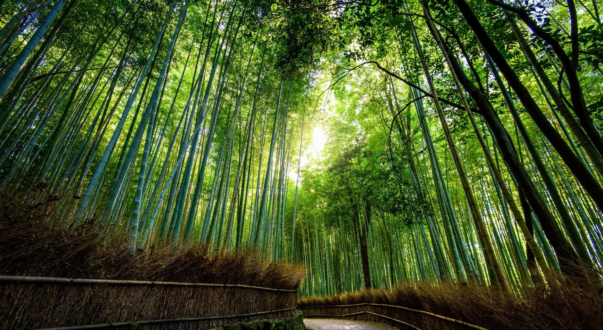 Bamboo Field Nature Wallpaper Hd Nature Wallpapers Japan