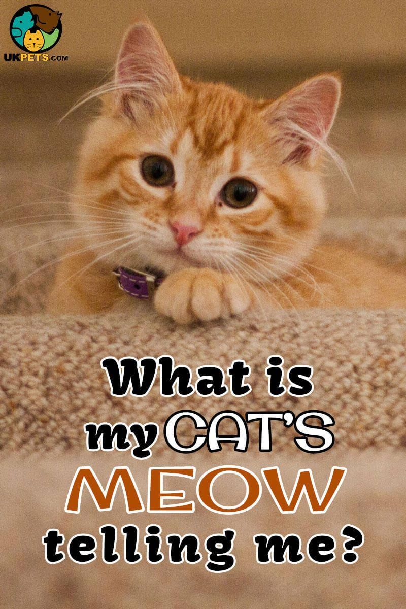 Cats Meow Because It S The Language They Use To Communicate With Humans We Do Not Exactly Know What Every Meow Means Read On Cats Cat Communication Cats Meow