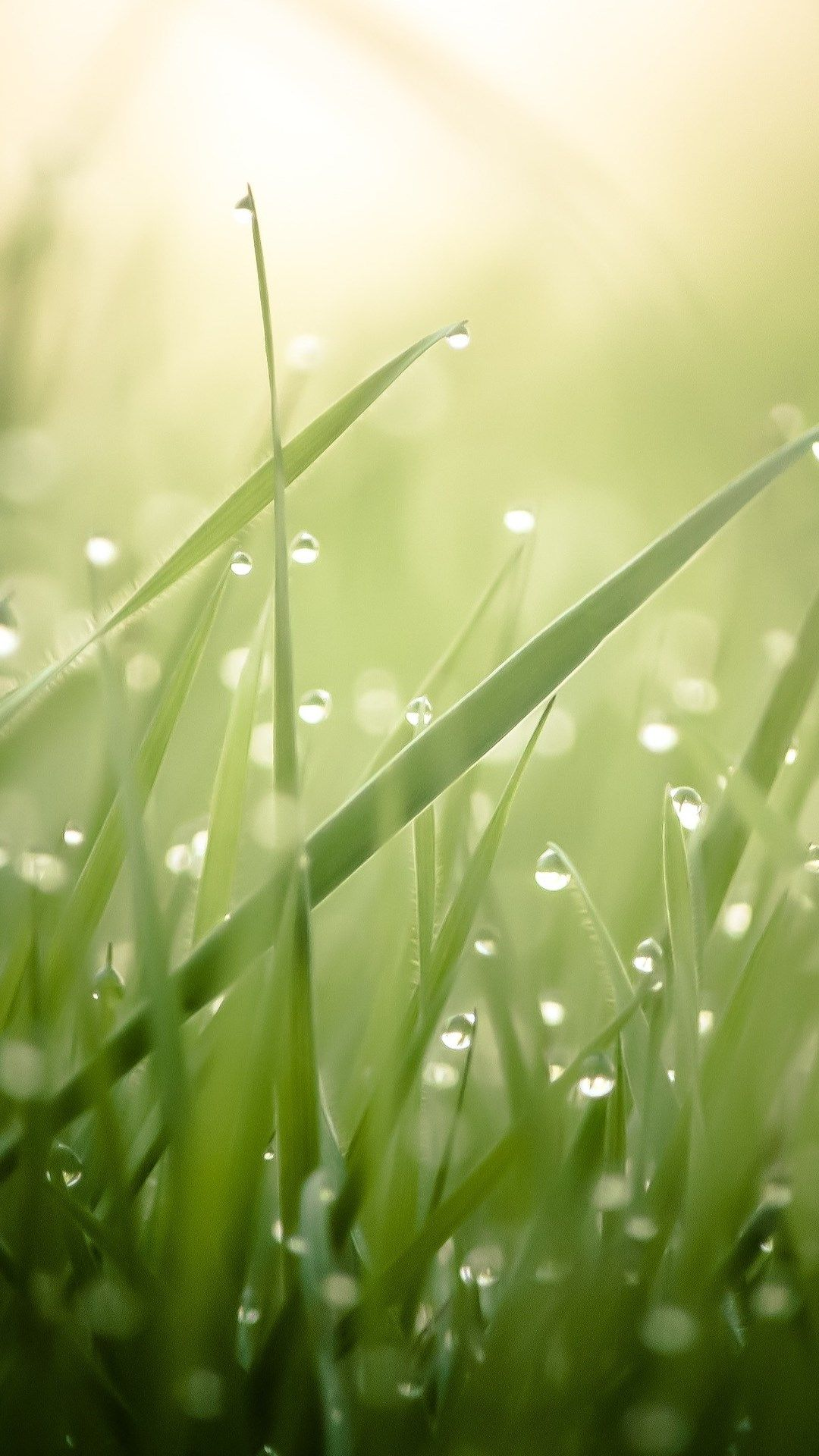 Water drop and grass. Pretty water drops/morning dews