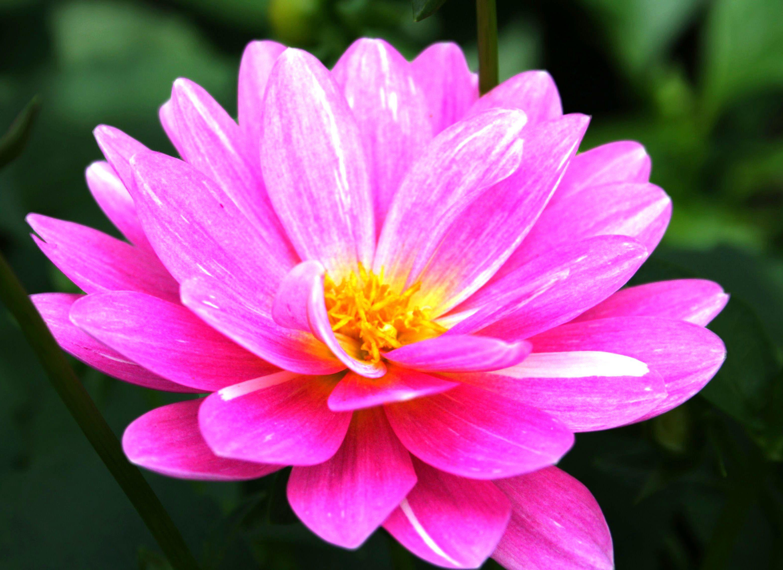 Beautiful flowers forestwander most beautiful flower in the world beautiful flowers forestwander most beautiful flower in the world izmirmasajfo