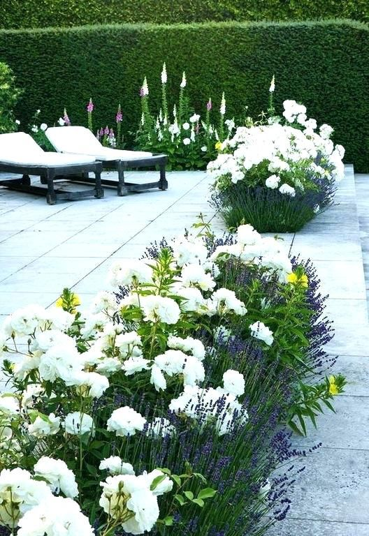 White Knock Out Roses Knockout Rose Bushes
