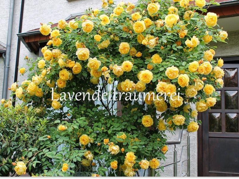 21 Ideen Für Große Und Kleine Gärten: Blumenbeet Anlegen: Traum-Ideen Für Ihr Gartenparadies