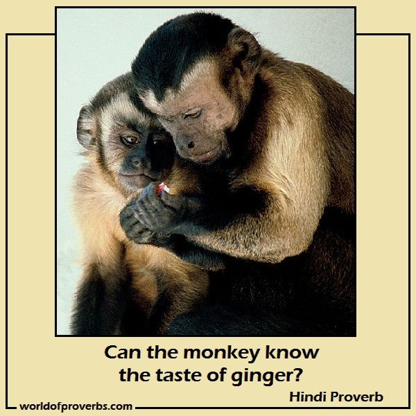 World Of Proverbs Famous Quotes Can The Monkey Know The Taste Of