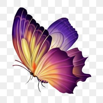 Spring Color Gorgeous Butterfly Realistic E Commerce Free Button Png, Butterfly Clipart, Spring, Butterfly PNG Transparent Clipart Image and PSD File for Free Download