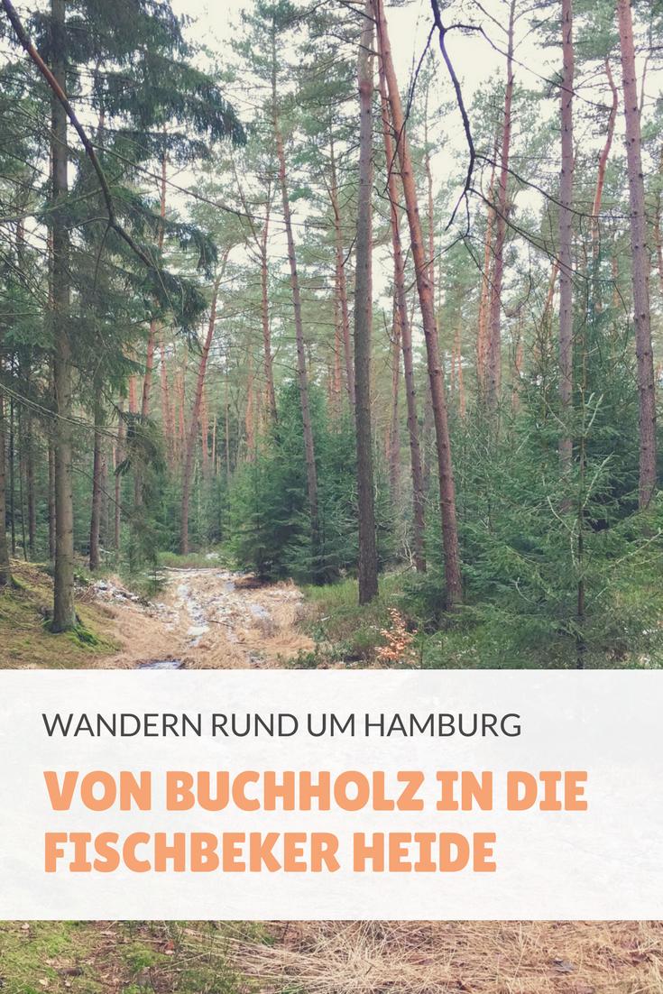 Wanderung Von Buchholz In Die Fischbeker Heide Wanderung Ausflug Waldmalerei