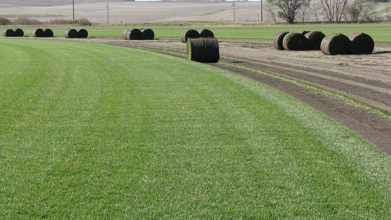 Sod Farms In Nebraska Google Search Farm Seed Growing Grass Farm