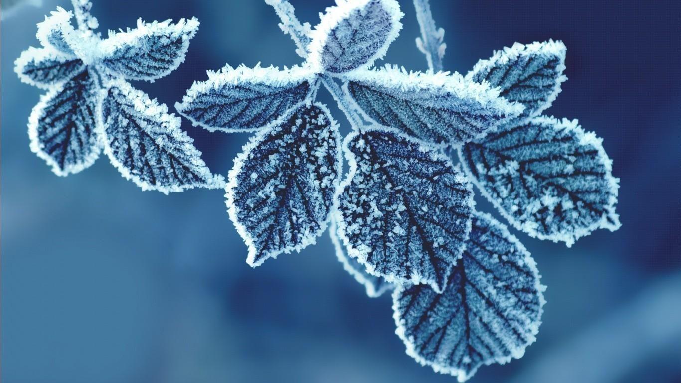 Leaves Freezing Macro Hd Wallpapers Desktop Backgrounds Mobile Wallpapers 1366x768 28762 Winter Leaves Winter Nature Winter Wallpaper