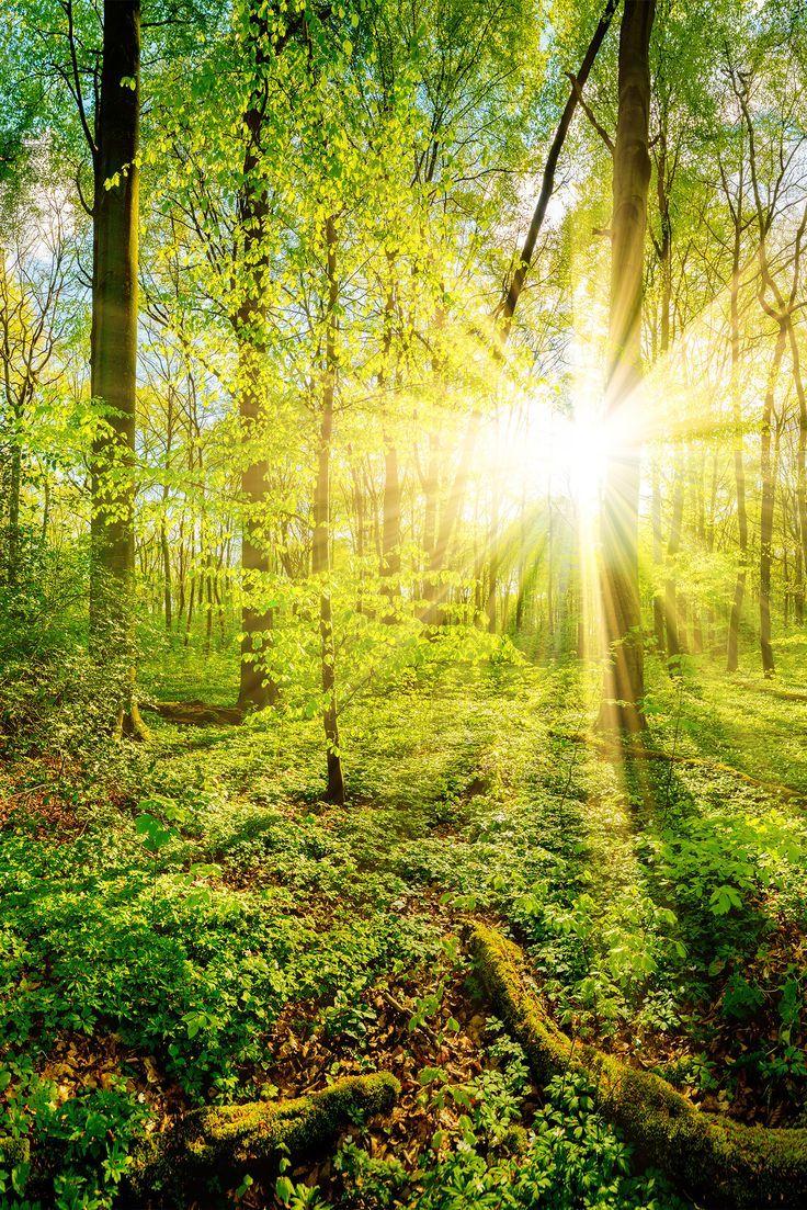 Frühling im Wald bei Sonnenuntergang   Naturbilder, Wald