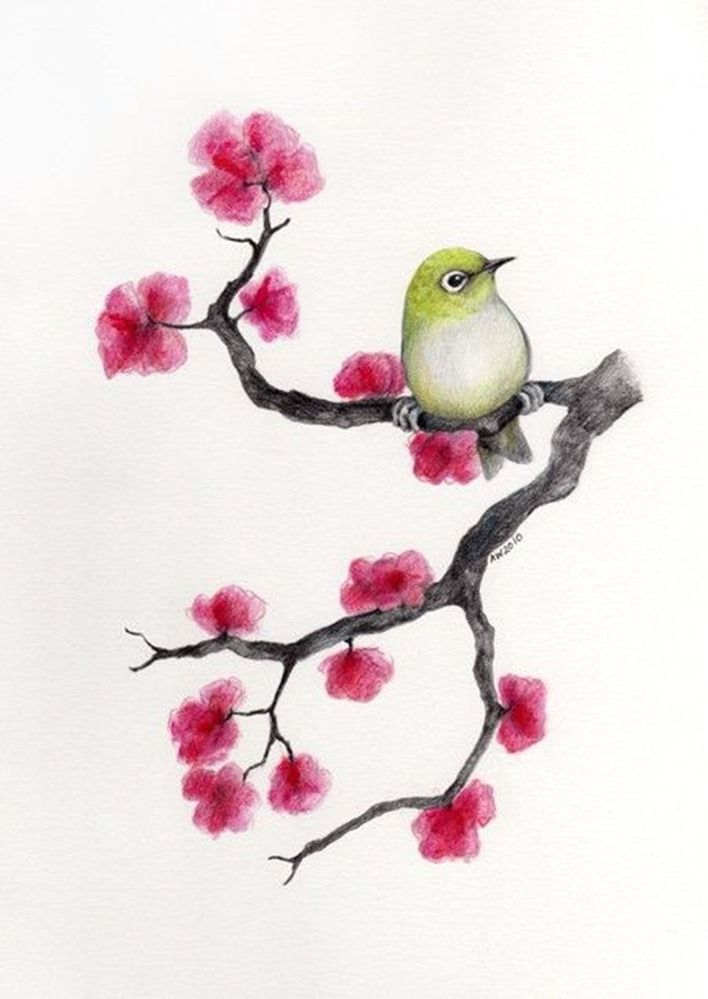 Drawing-Cherry-Blossom | Decoupage with Birds | Pinterest | Para ...