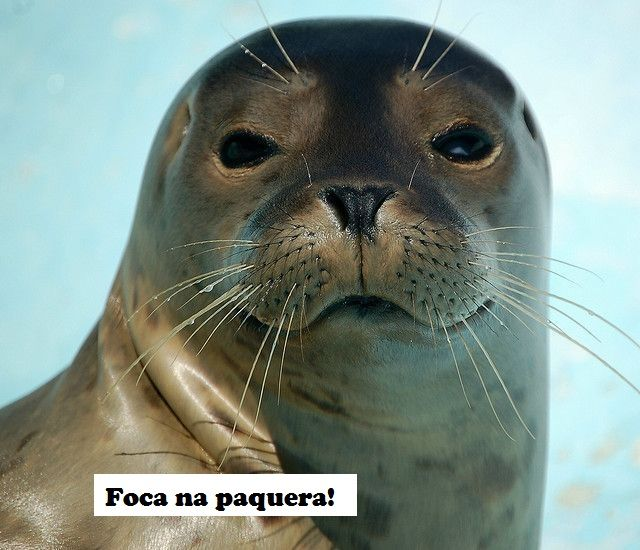 Foca Na Paquera Harbor Seal Cute Seals Animals Friends