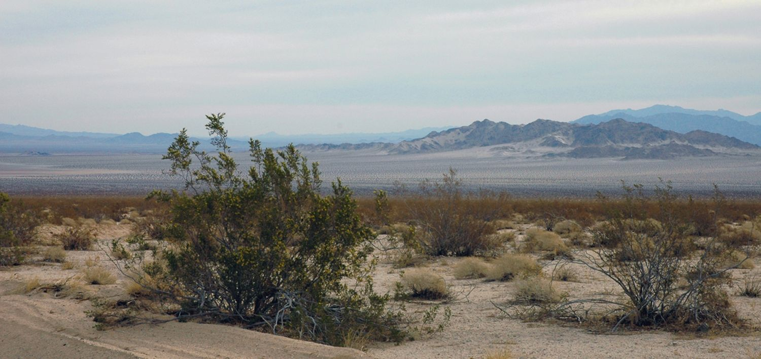 Pin By Alison Causer On Collection Of Images Desert Art California Desert Image