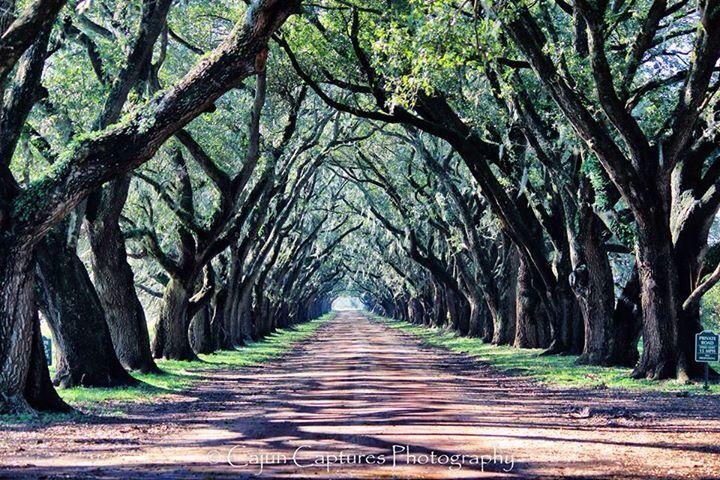 Cajun Captures Photography  Alley of Oaks at Evergreen Plantation, Wallace, Louisiana