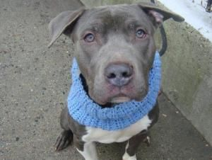 Pin On Ny Nj Local Dogs In Dire Need Of Rescue Foster Adoption