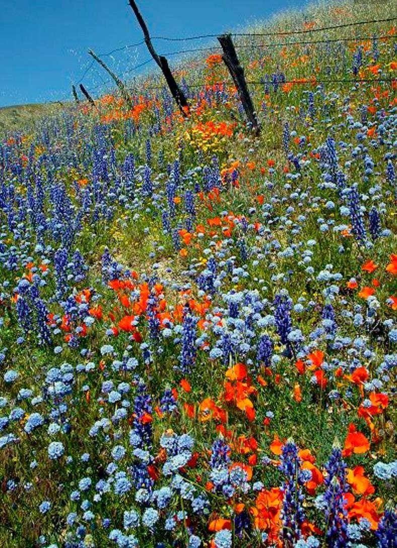Pin de Mária en Erdők,mezők,hegyek virágai | Pinterest | Hoja y Flores