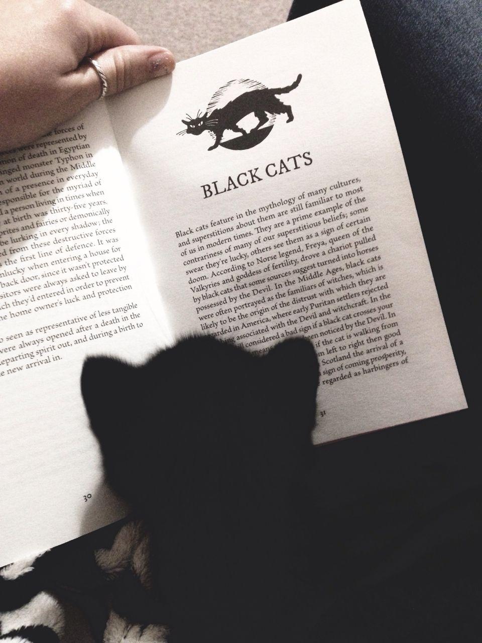 Black cat  http://www.pinterest.com/pin/461056080576325392/  ...  http://www.pinterest.com/pin/461056080575473473/