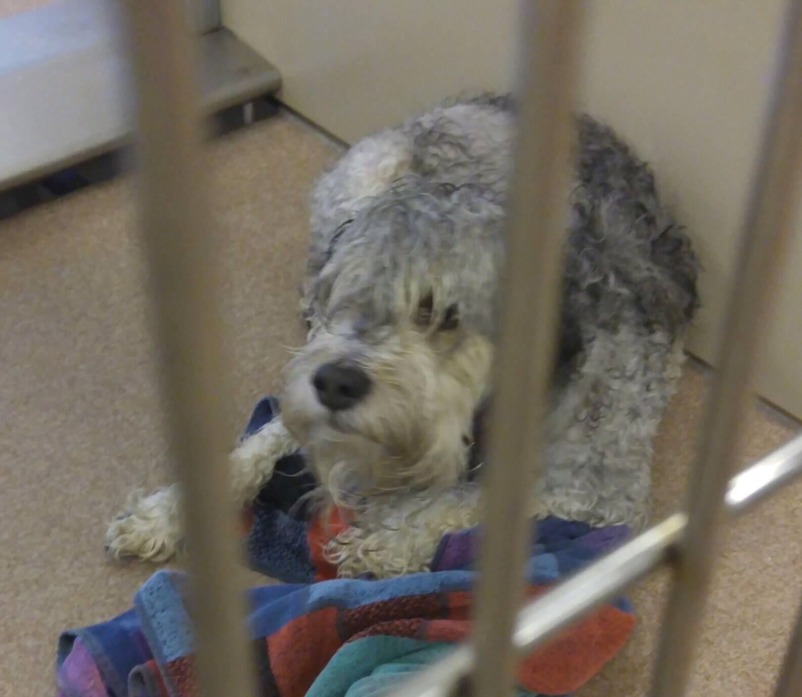 City of Shelton Animal Shelter Like This Page · September
