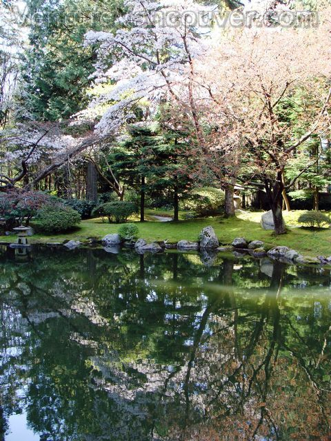Pond with Cherry Blossoms at the Nitobe Memorial Gardens | Secret ...