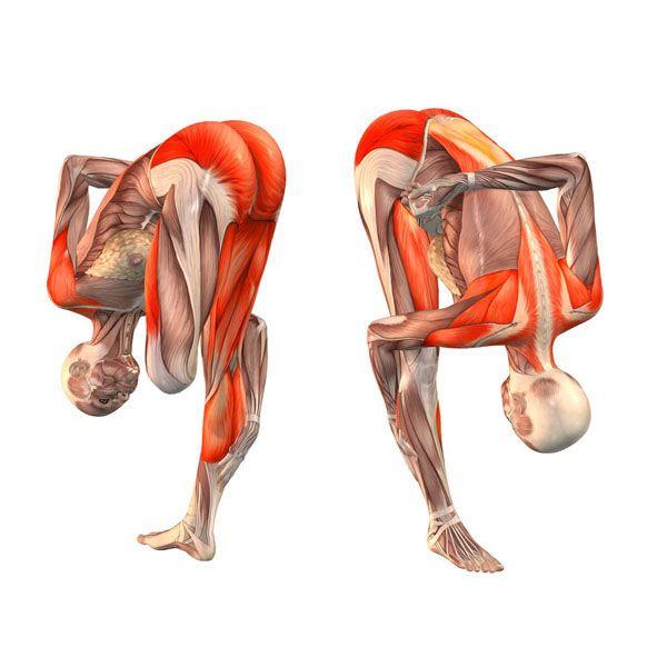 Left half-bound lotus intense stretch pose - Ardha Baddha ...