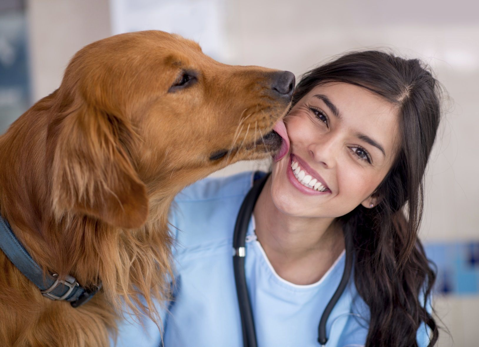 7 Things You'll Love About Being a Veterinarian Assistant