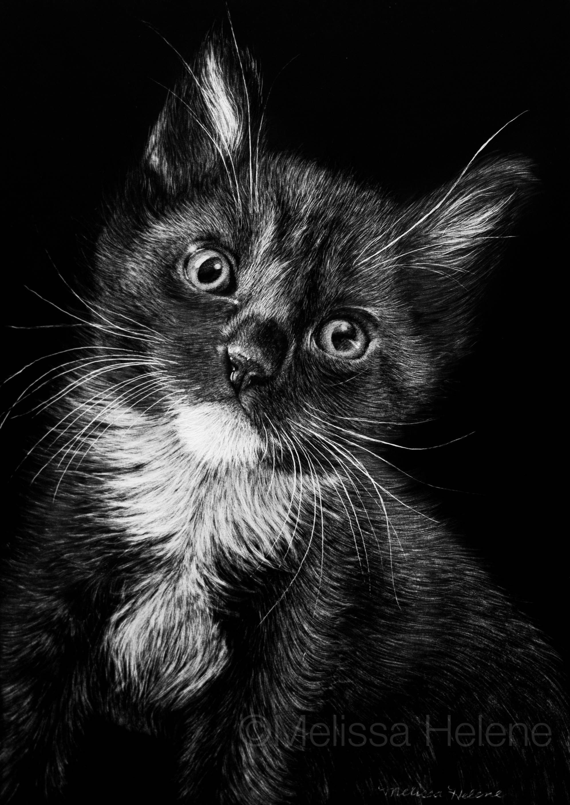 Wildlife Scratchboard Artwork Portrait Photography Of Melissa Helene Central WI Based Is Currently Taking Commissions New