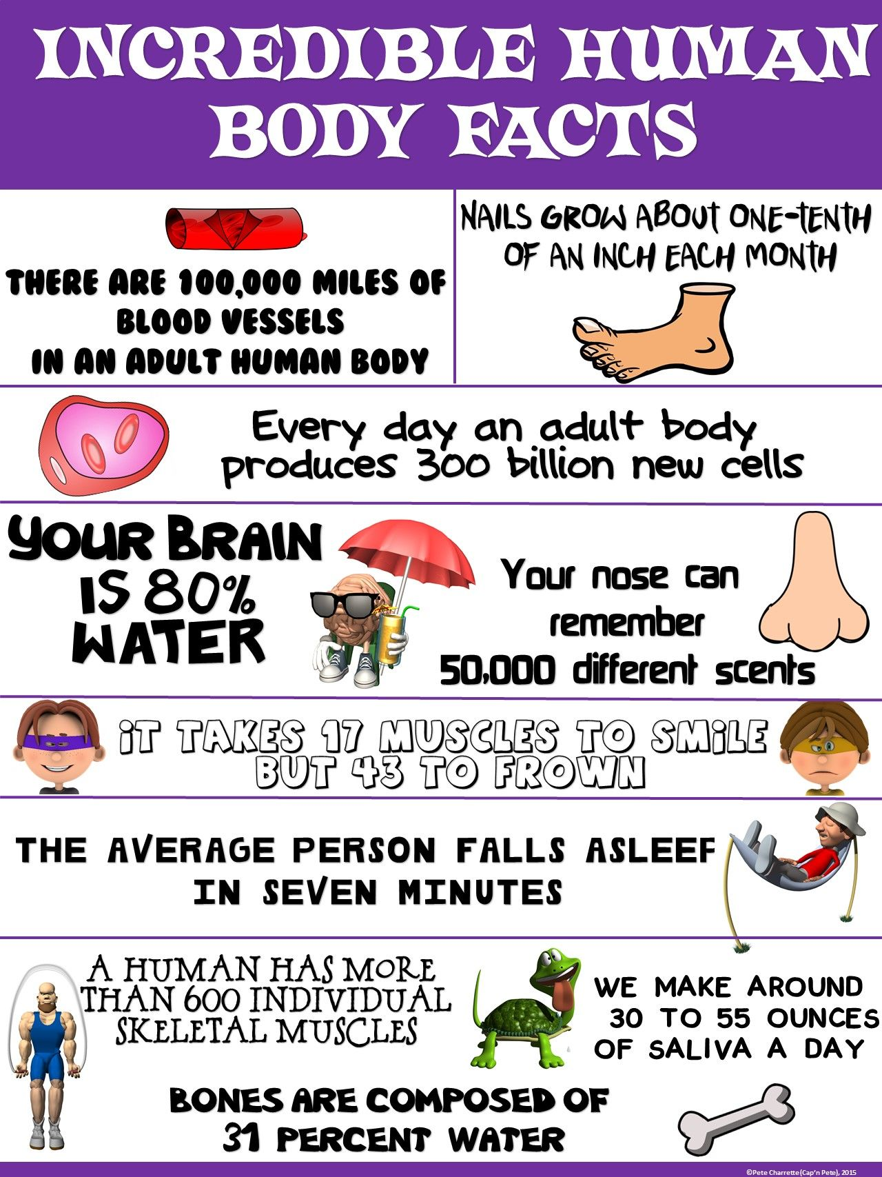 Health and Science Poster Incredible Human Body Facts is part of Human body facts - OUR BODIES ARE INCREDIBLE!!! This colorful  Incredible Human Body Facts  poster compiles a variety of interesting facts about the human body  The facts are meant to teach your students some cool realities about our bodies and are they presented in a  cool , contemporary poster format! The PDF file