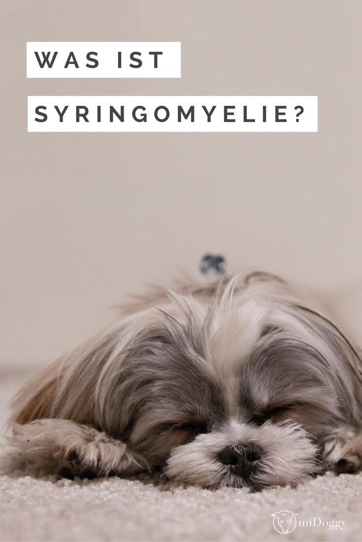 Syringomyelie Definition Symptome Diagnose Behandlung Kosten Co Mit Bildern Hunde Hundeerziehung Hundeernahrung