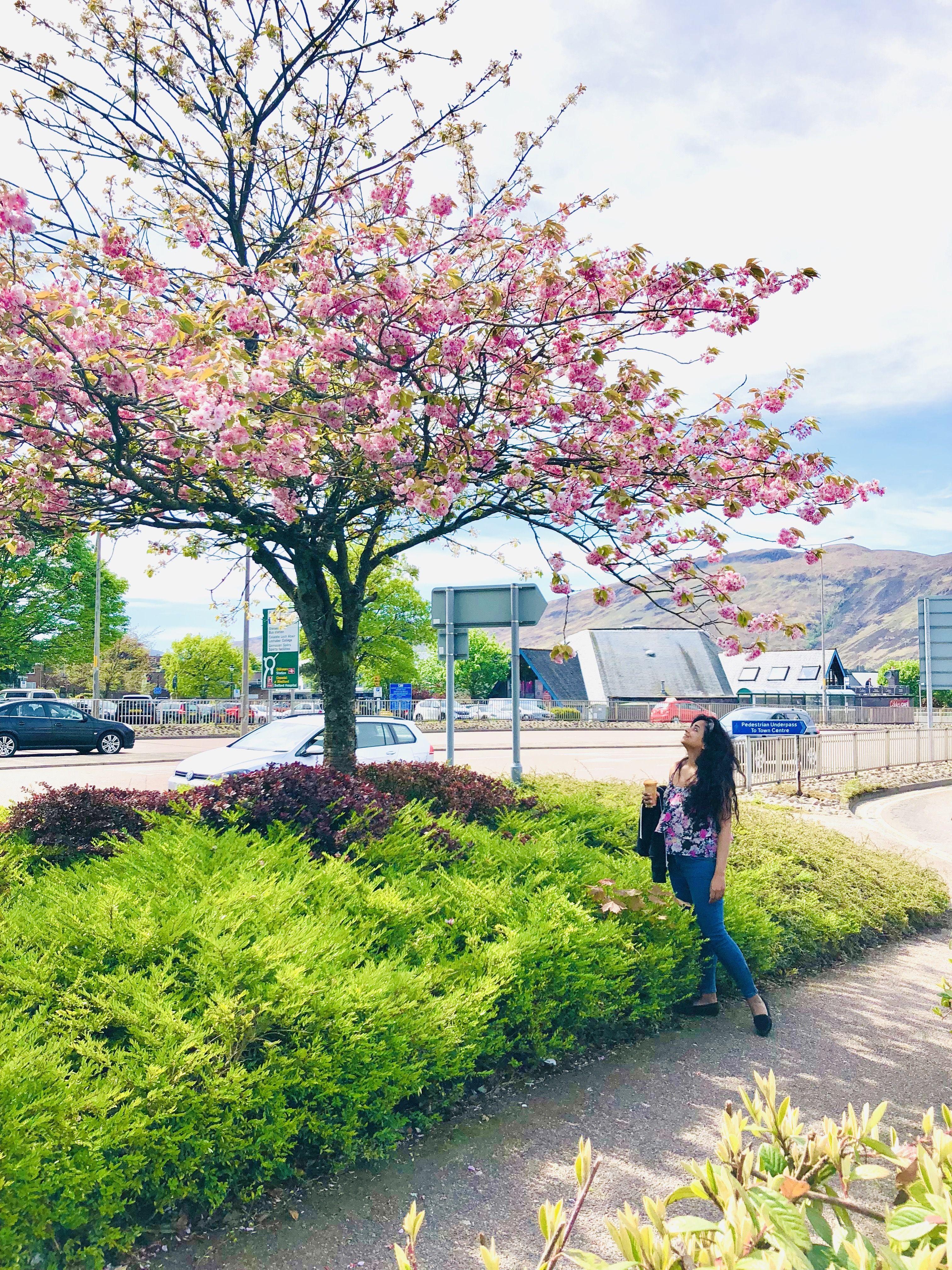 #cherryblossom #PinkFlowers #FlowerLover #indiantraveller #photooftheday #weekendvibes #photoshare_everything #Summerishere #Longhair #sheisnotlost #IndianBlogger #Lonelyplanetindia #passionpassport #thetravelwomen #flowerphotography #scotlandsbeauty #scotland_greatshots #Scottish #treesarelife #naturelovers #flowerstagram #cherryblossomtree #Dreamy #ootd #Sunshine #bluesky #cloudyday #Highlands #igflowers #femmetravel