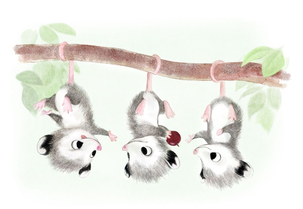 Syd's Illustrations : Baby Possums!   Animal drawings, Cute animal ...
